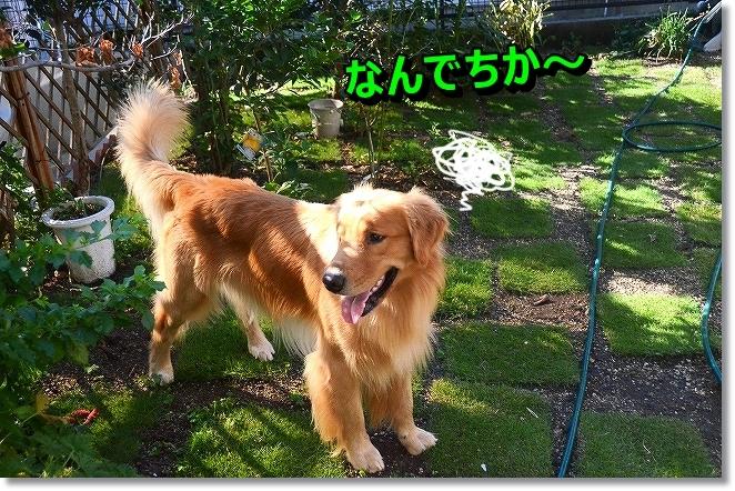 DSC_2086_20131030001841037.jpg