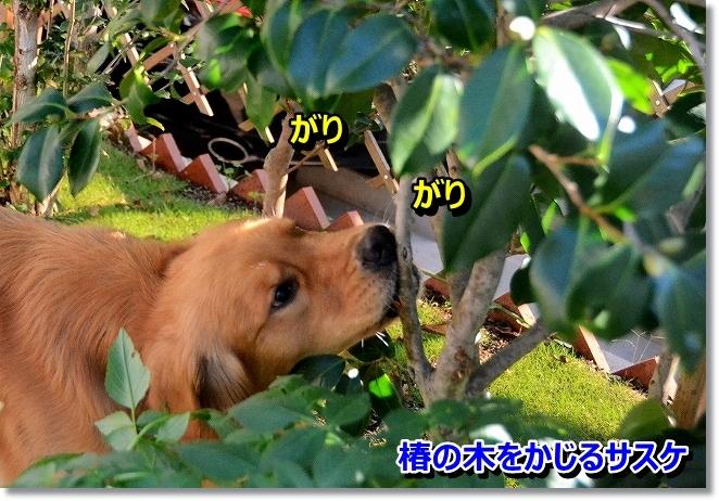 DSC_2096_201310300019093ab.jpg