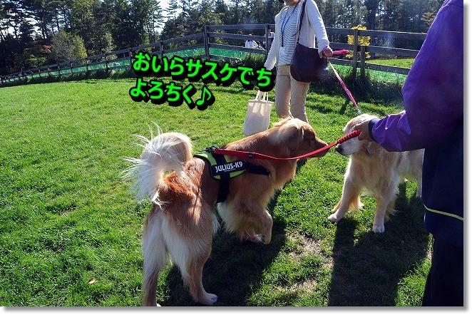 DSC_2187_20131016202947d1f.jpg