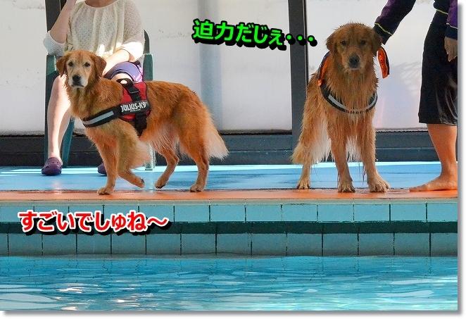 DSC_2306_201310171133216ed.jpg