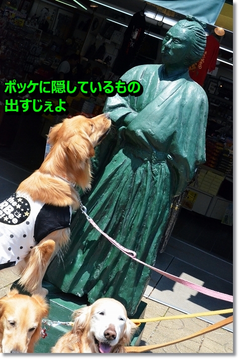 DSC_2487_20130515094424.jpg