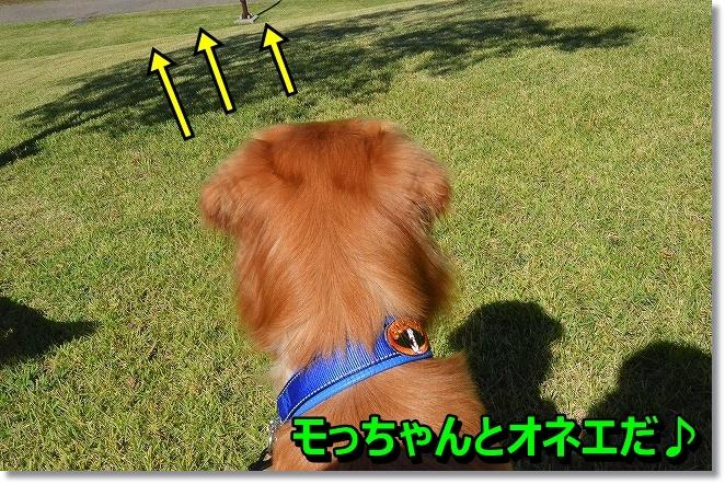 DSC_2527_201311040100493e5.jpg