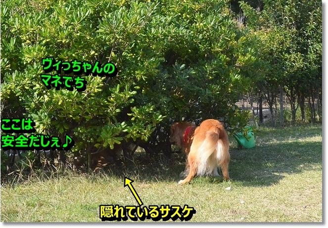DSC_2718_2013110511421025b.jpg