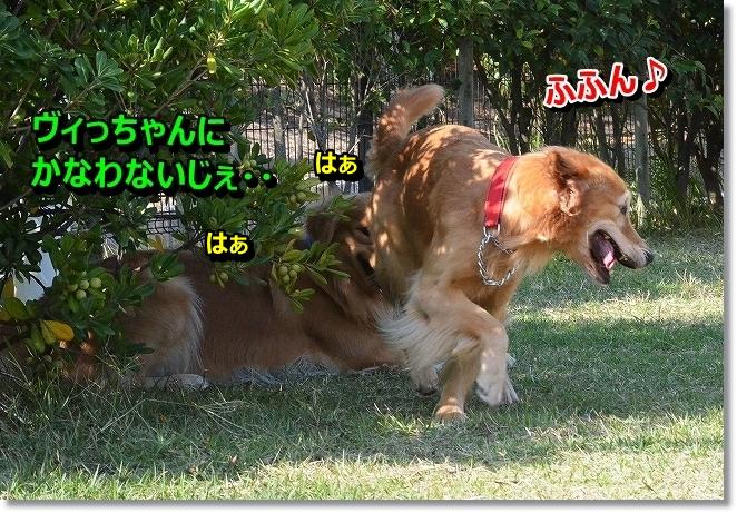 DSC_2744.jpg