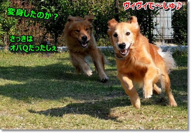 DSC_2758_201311112254135e0.jpg