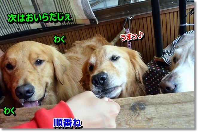 DSC_2922_20130518195344.jpg