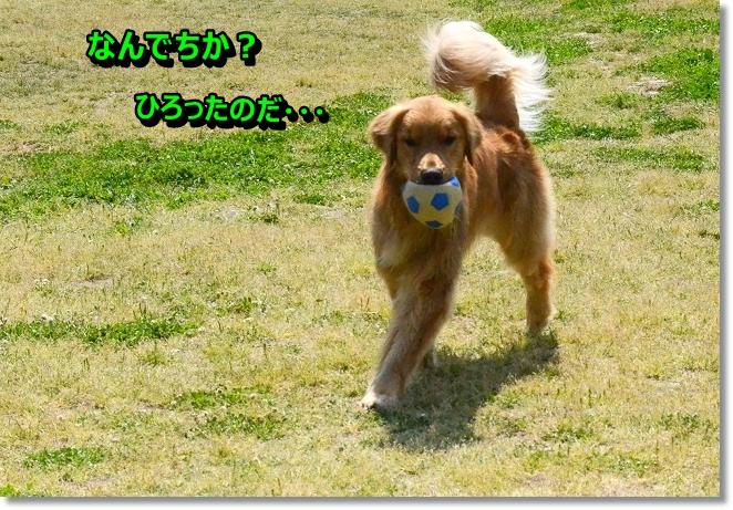 DSC_3034_20130520105203.jpg