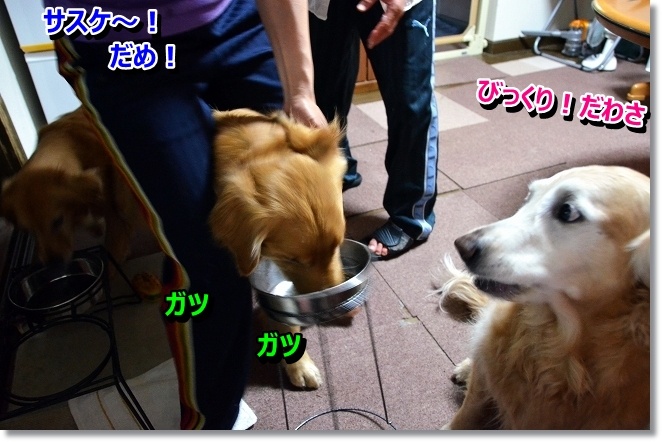 DSC_3618_20130523001536.jpg