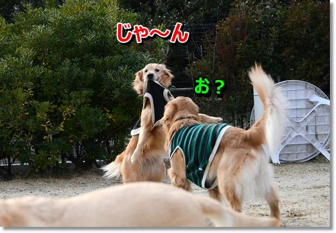 DSC_6327.jpg