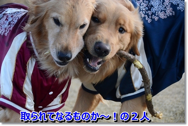 DSC_7516.jpg