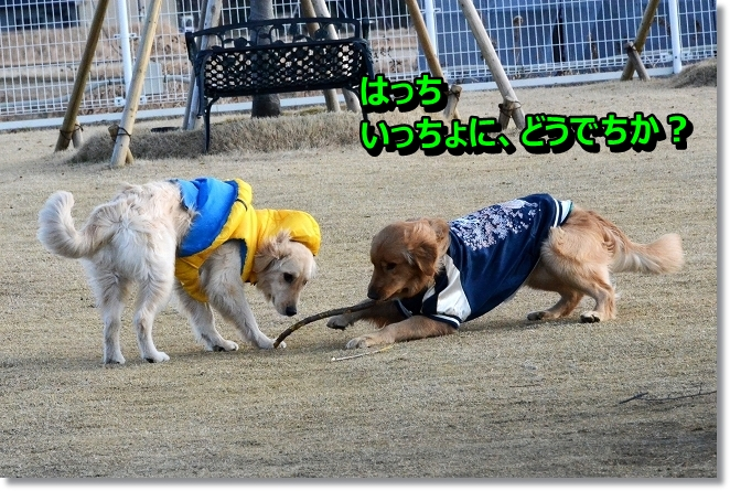 DSC_7588_20130303225049.jpg