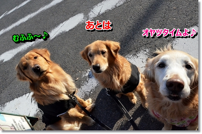 DSC_8253.jpg