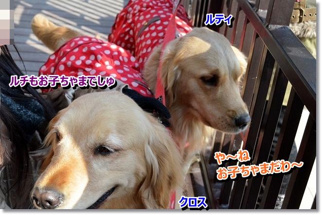 DSC_8483.jpg