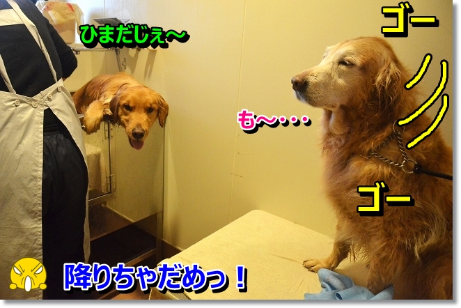 DSC_8539.jpg