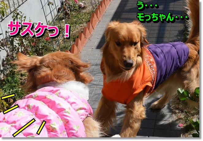 DSC_8641_20130318014425.jpg