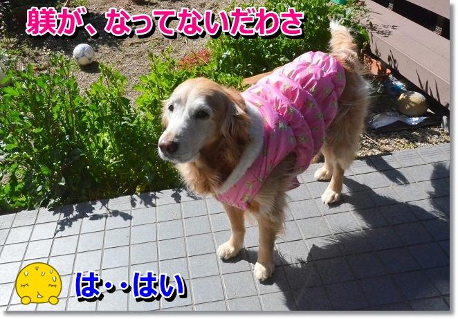 DSC_8647_20130318014444.jpg