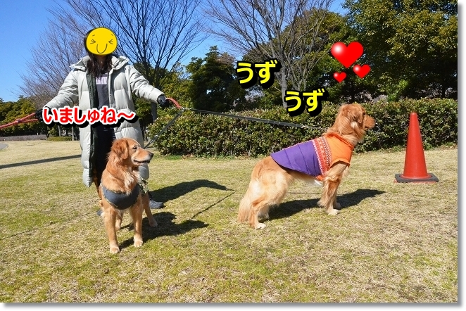 DSC_8671_20130328220232.jpg