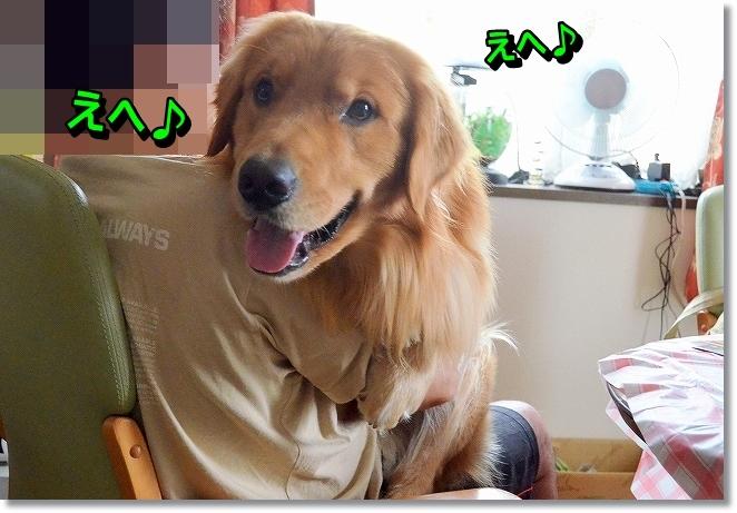 DSC_8689_20130920232634134.jpg