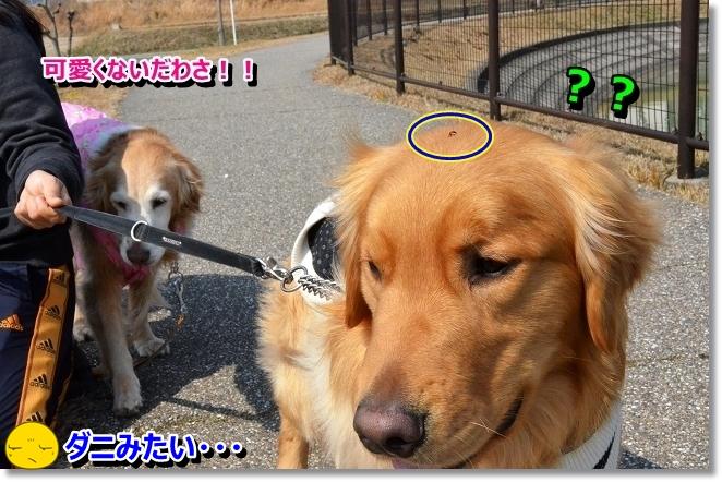 DSC_8873.jpg