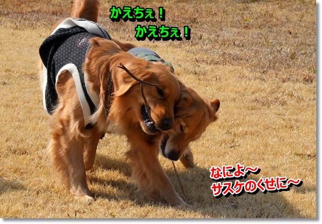 DSC_8884.jpg