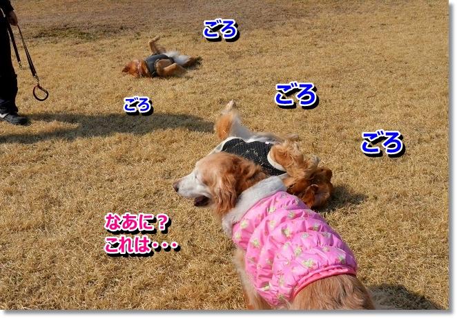 DSC_8885_20130327012044.jpg