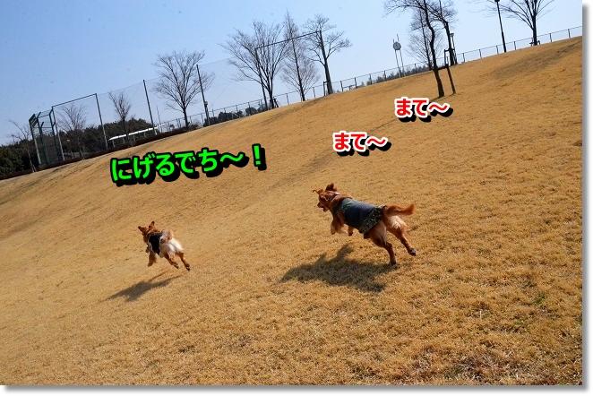DSC_8900_20130327012105.jpg