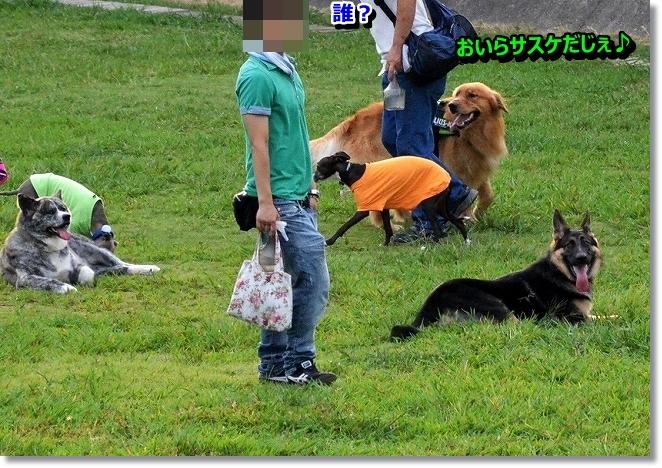 DSC_9304_2013092323280151f.jpg