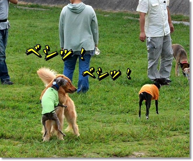 DSC_9309_2013092323291686e.jpg