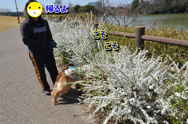 DSC_9795-1.jpg