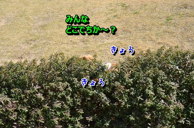 DSC_9819-1.jpg