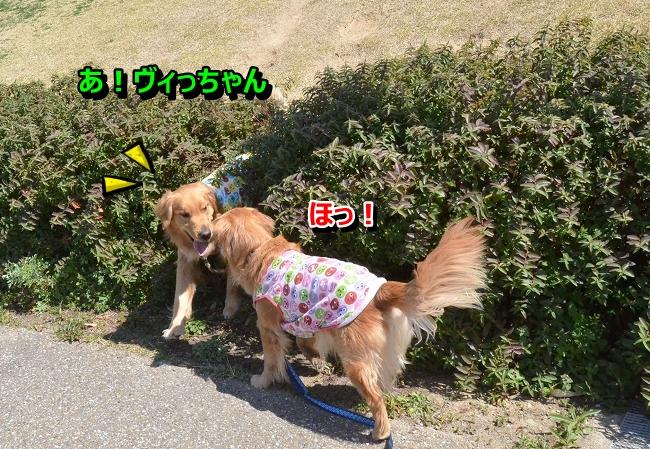 DSC_9823-1.jpg