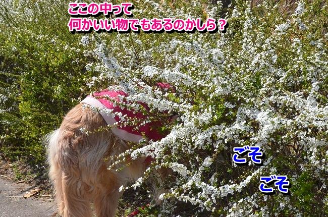 DSC_9829-1.jpg