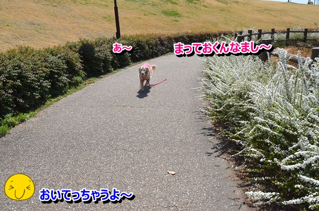 DSC_9830-1.jpg