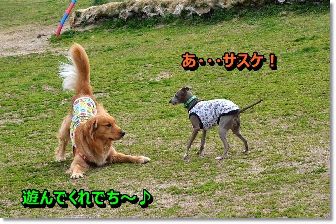 DSC_9861.jpg