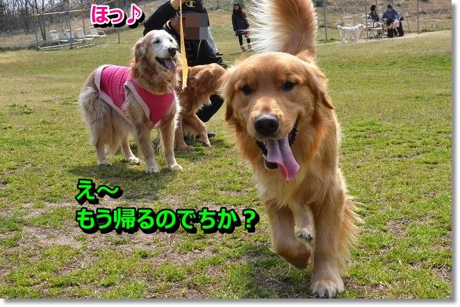DSC_9890_20130325000622.jpg
