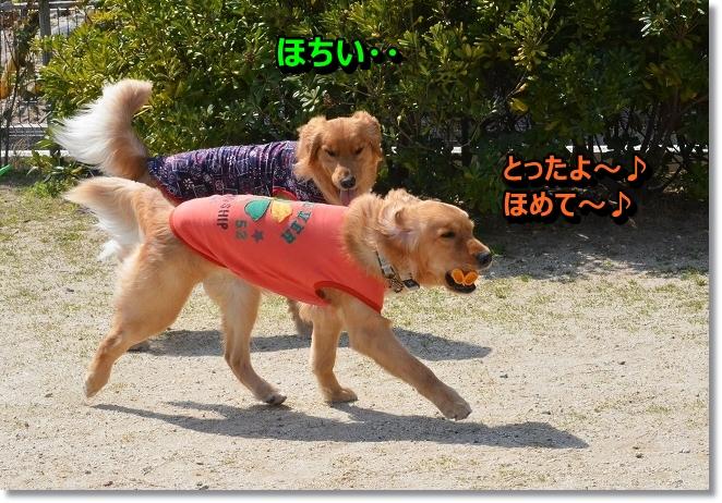 DSC_9906_20130412205819.jpg