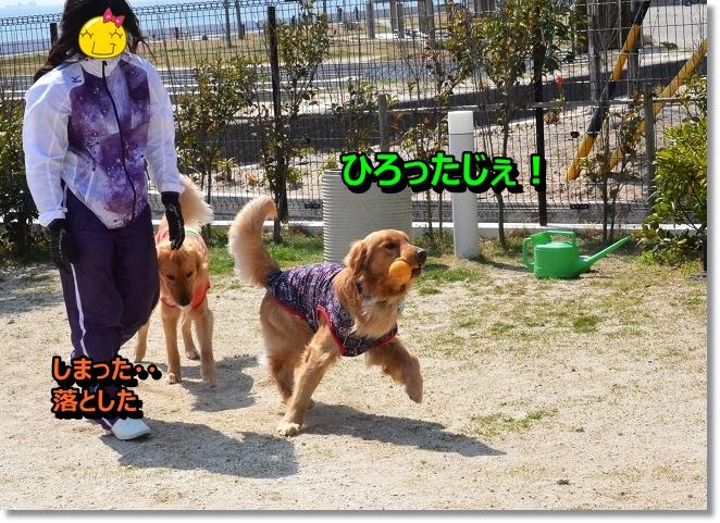 DSC_9915_20130412205848.jpg