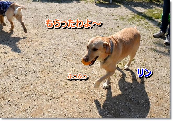 DSC_9976_20130412205850.jpg