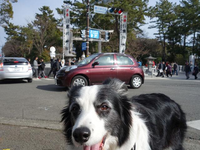 寒川神社前