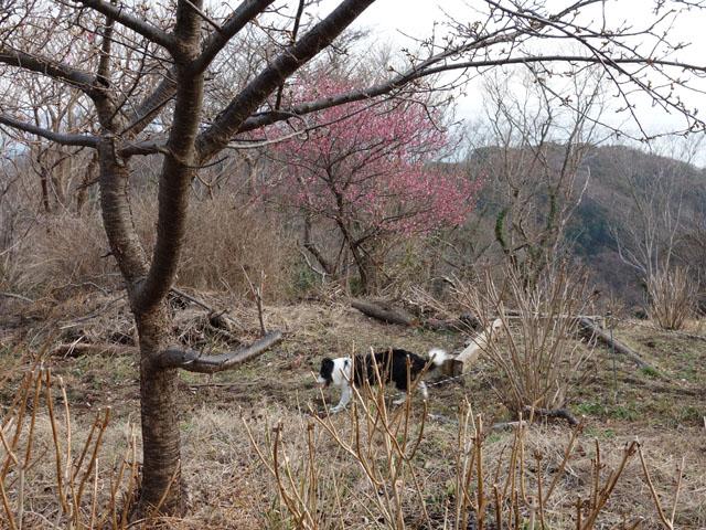 湘南平を散歩