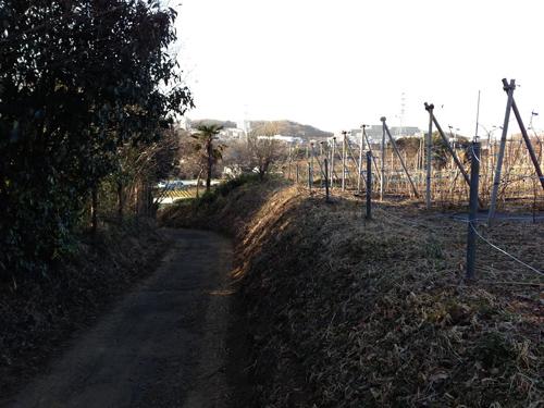minamiyama048.jpg