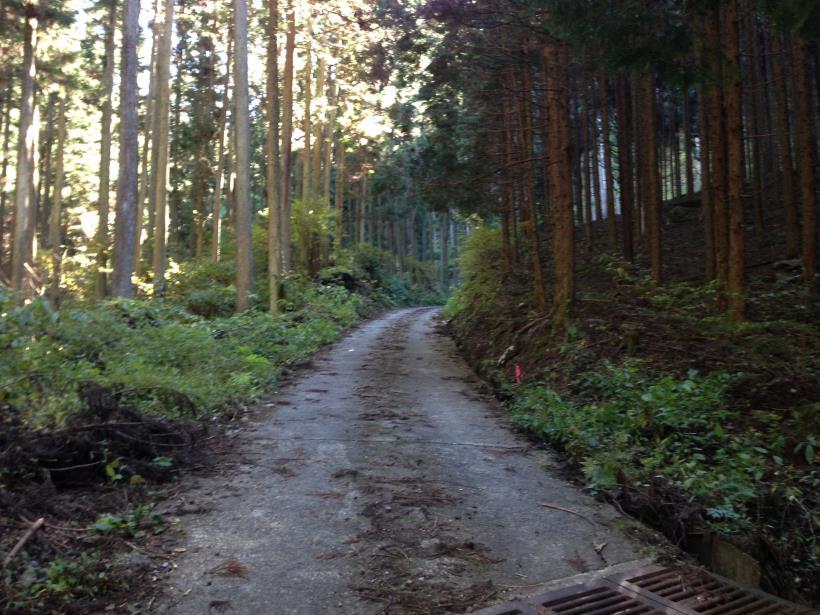 natsuzawa24.jpg