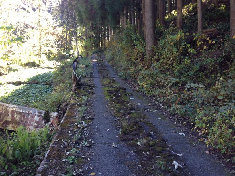 natsuzawa39.jpg
