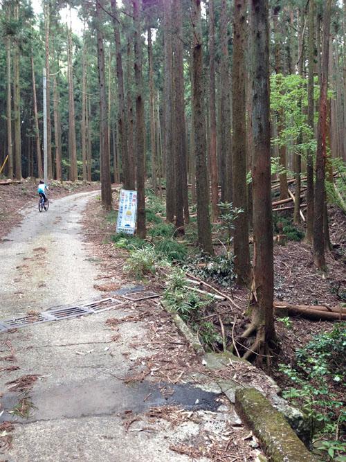 ninoashi09.jpg