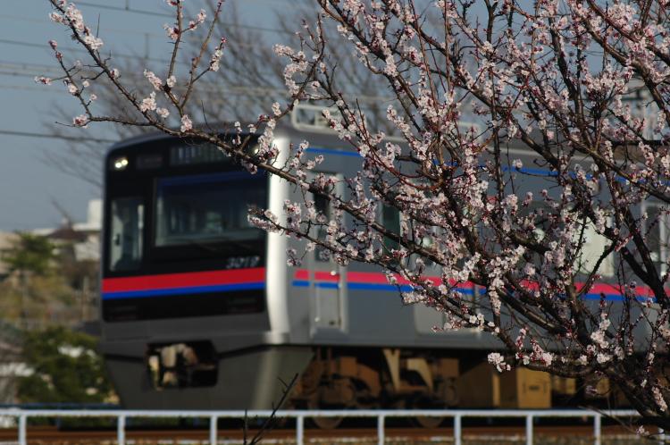 2013年03月09日 京成 310