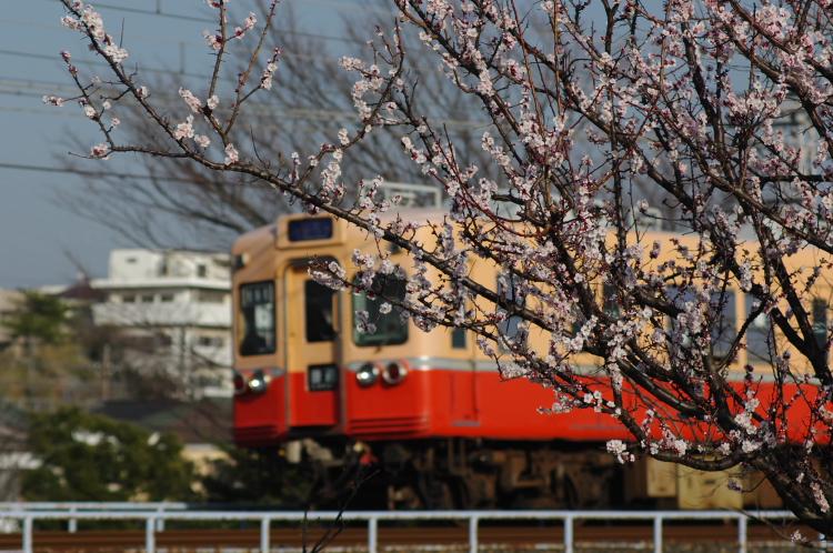 2013年03月09日 京成 305