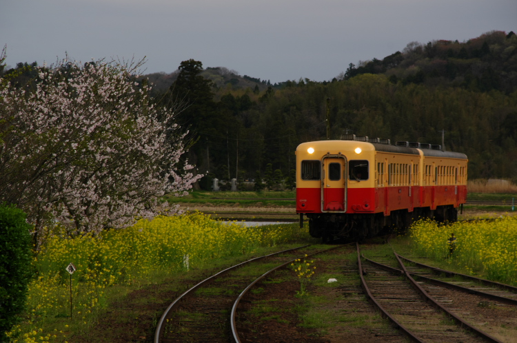 2013年04月01日 小湊鉄道 023