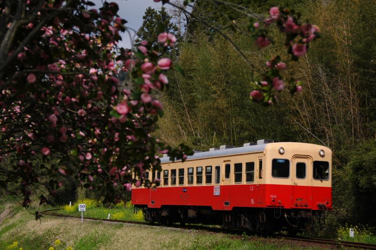 2013年04月01日 小湊鉄道 012