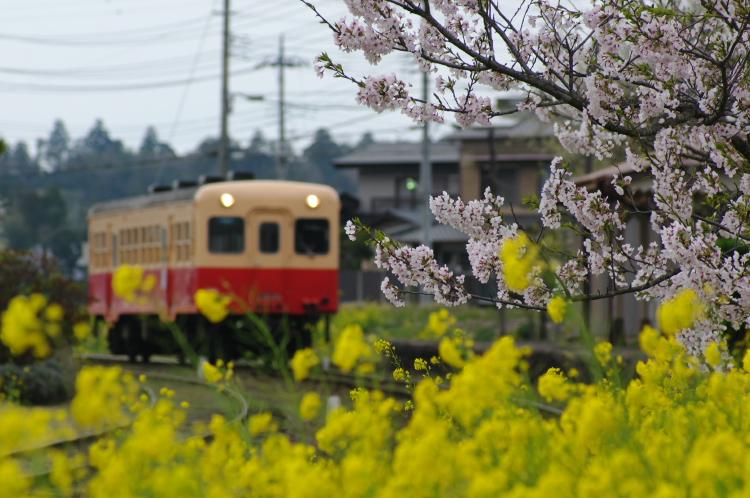 2013年04月01日 小湊鉄道 008