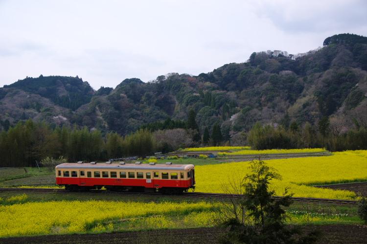 2013年04月01日 小湊鉄道 022
